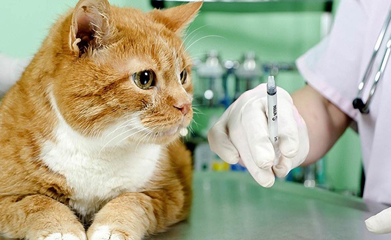 Хпн стадии по креатинину у кошек. Острая почечная недостаточность у кошек