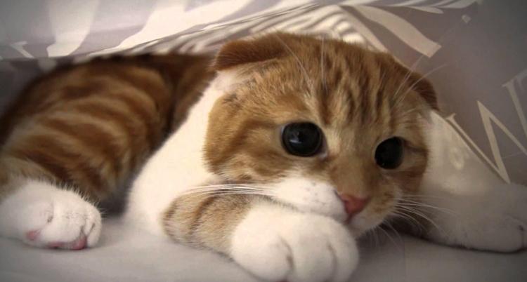 Дрожь тремор у котов