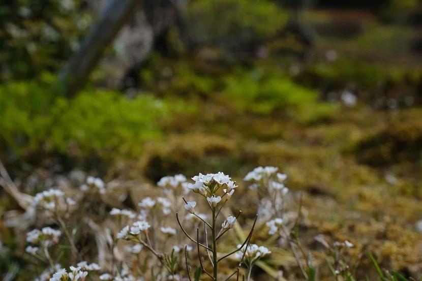 x-pro3で撮影の庭の植物の写真