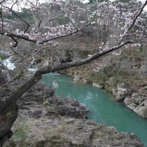 厳美渓の桜の写真