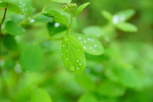梅雨のイメージ画像