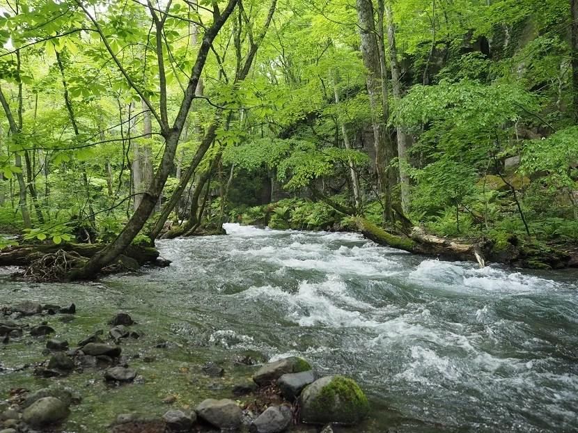 奥入瀬渓流の5月の写真