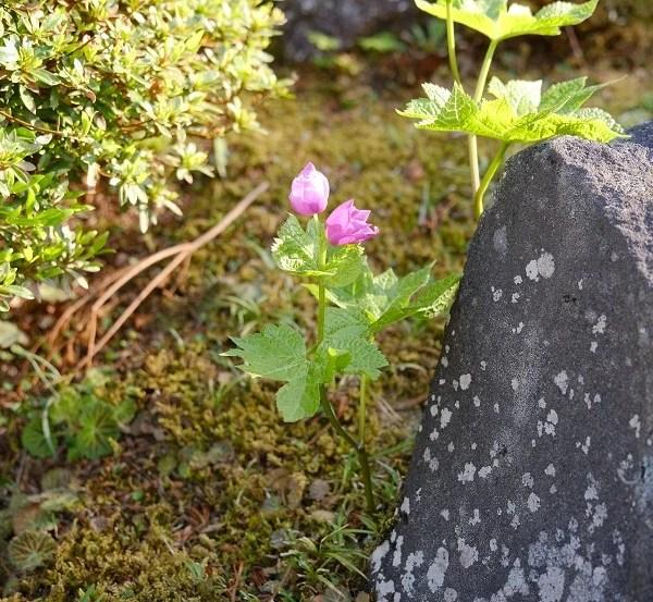 庭の草花の写真