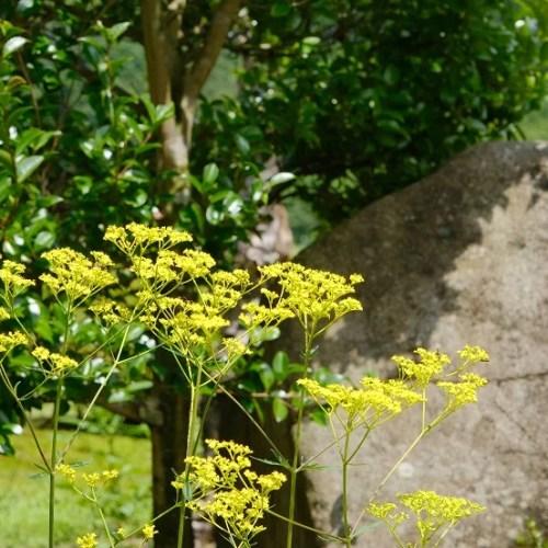 庭の花・7月の写真