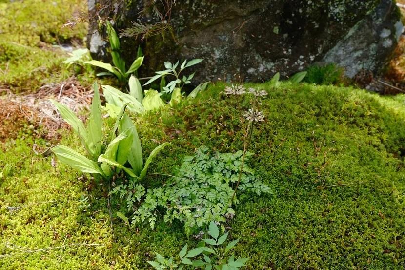 自宅庭の草花の写真