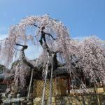 春の奈良公園
