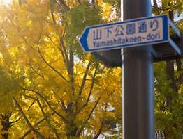 横浜 紅葉 公園