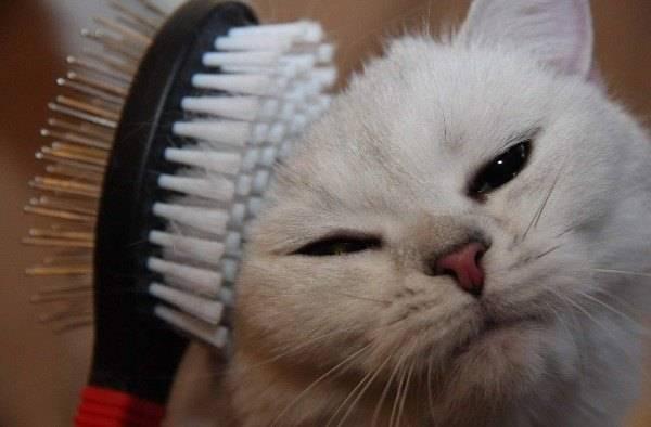 Кот сильно линяет почему и как этого избежать