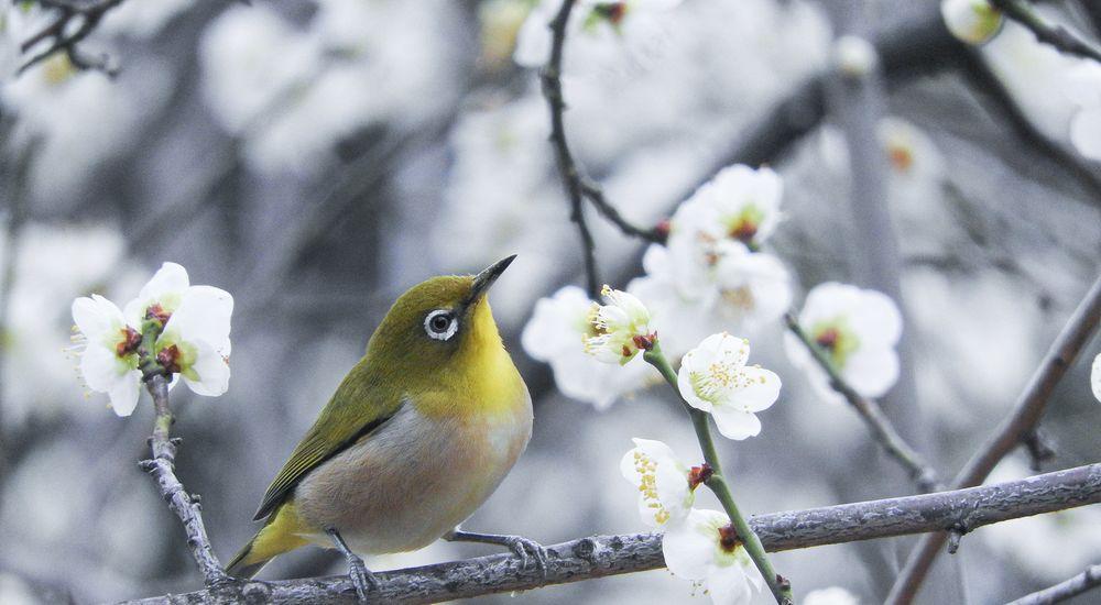 鳥と鳥の種類の漢字が入った苗字 一覧 920 種類 難読・珍しい名字