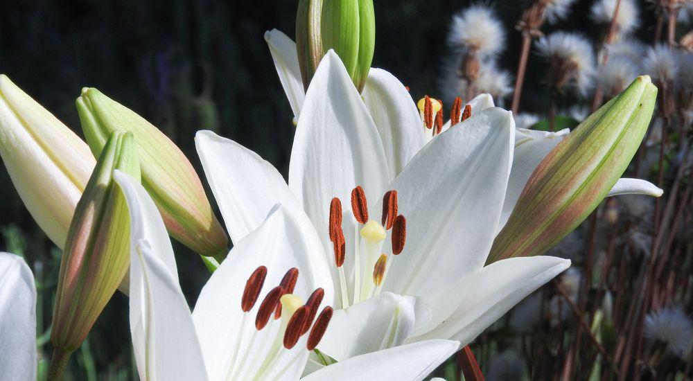 漢字3文字の『花』の名前 - 和名の草花 一覧