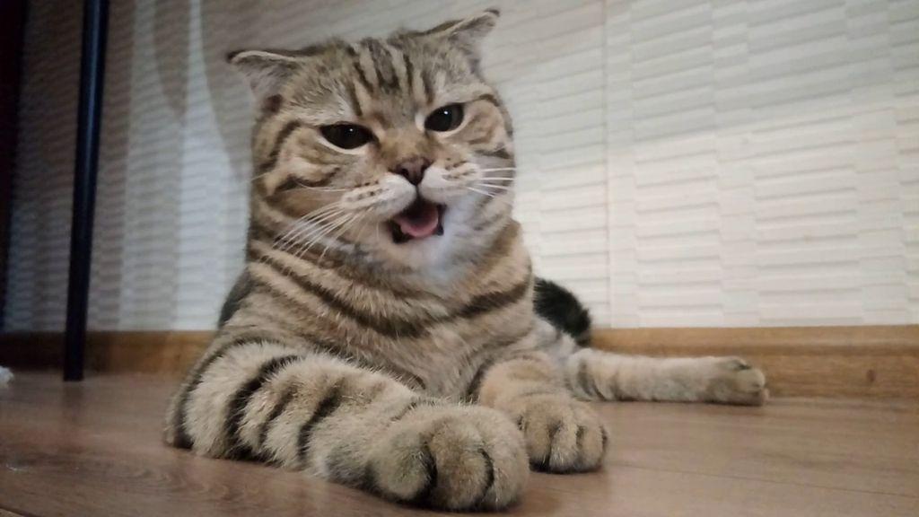 Учащенное частое дыхание у кошки