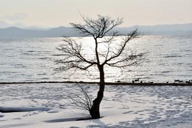 猪苗代と磐梯山そして白鳥(猪苗代湖・志田浜より撮影)
