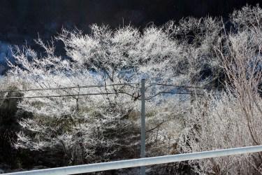 霧氷かな?氷点下11度の朝(福島県二本松市)
