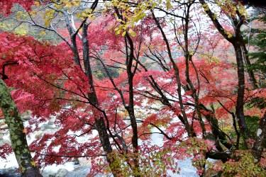 夏井川渓谷、雨降りの一日で残念でも、カメラマン観光客は少なくて渋滞は無し。
