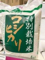 秋田)山菜栽培、高齢者の生きがいと次世代の収入源に