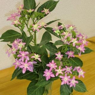 Flower_640x640_320x320