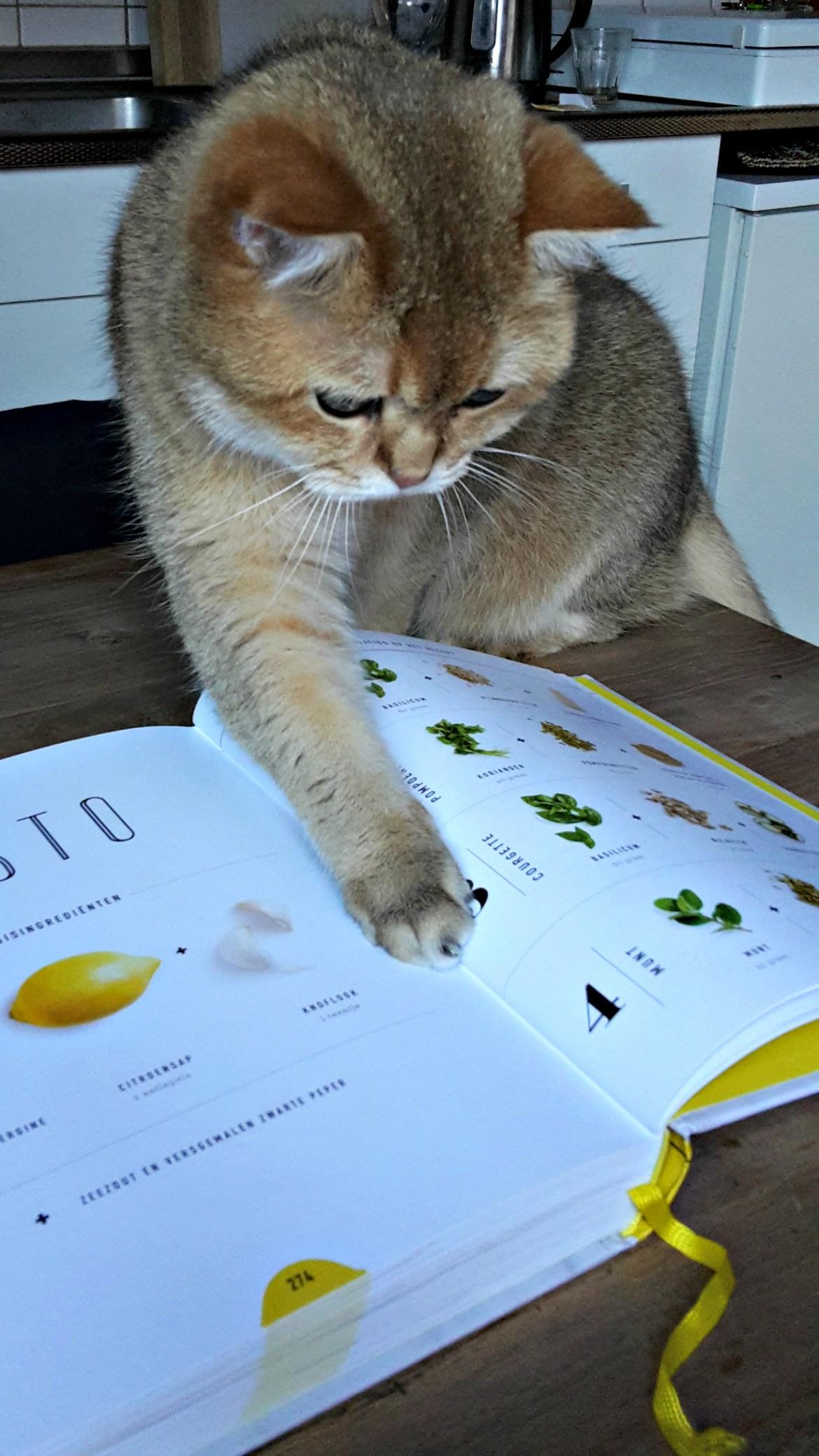 love-and-lemons_cat