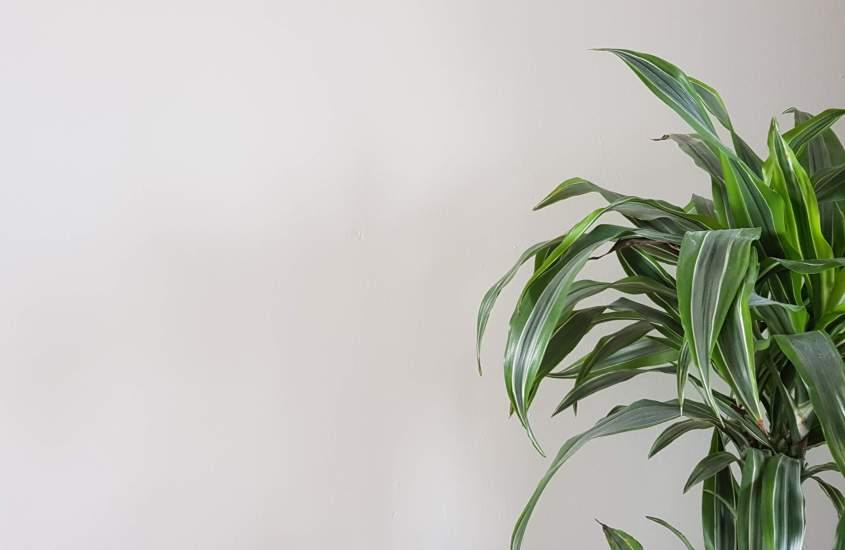 Duurzaam omgaan met je planten