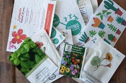 Duurzame activiteiten in de tuin: biologische bloemen zaaien