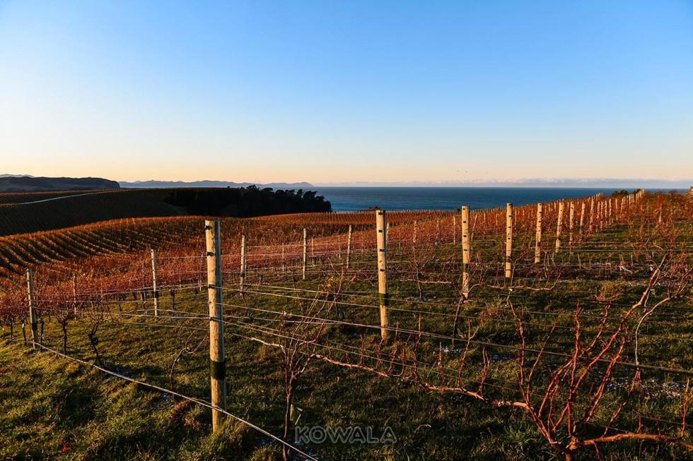Coucher de soleil sur un vignoble pvt farm job whv