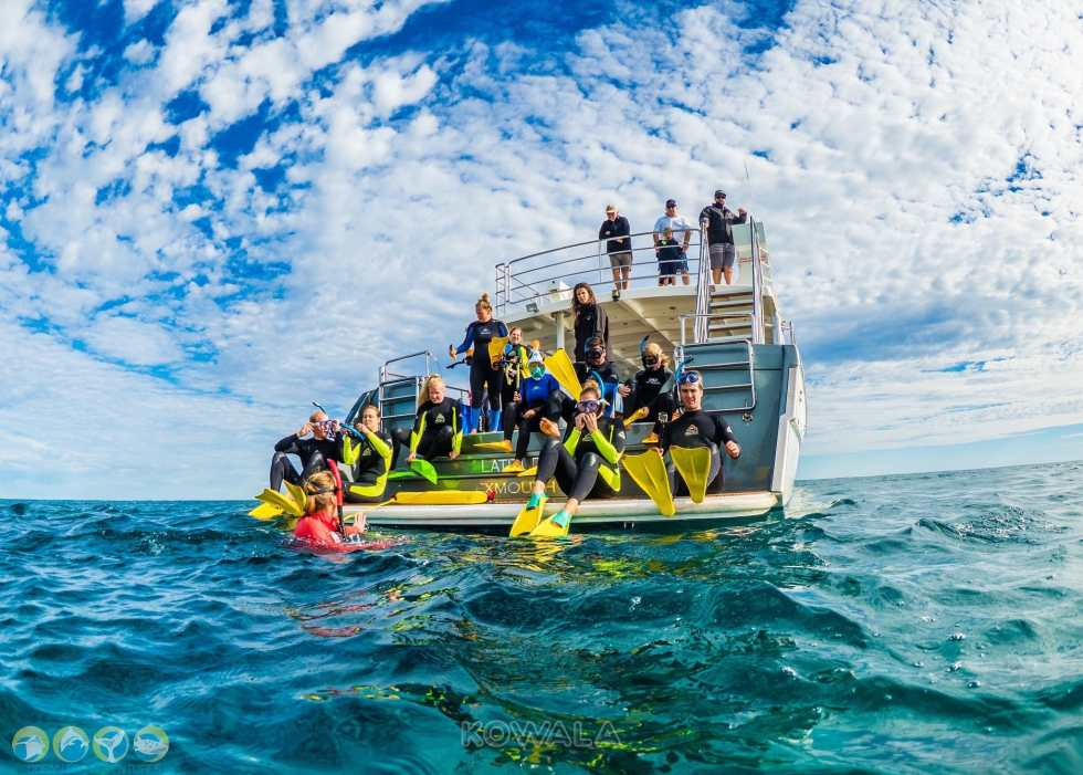 Humpback whales tour swim nage baleines à bosses exmouth ningaloo reef ocean eco adventure