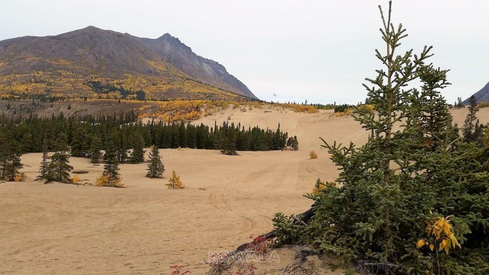 le désert de carcross, yukon, canada, en automne
