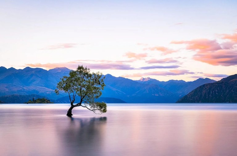 Wanaka lake lone tree new zealand nouvelle zelande oceanie sunset coucher de soleil pvt whv backpacker travel photography