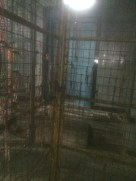 The barricades towards the sanctum