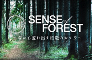 sense_of_forest