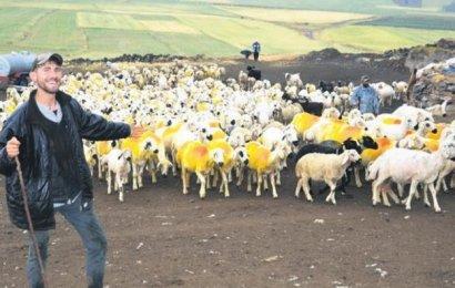 Fenomen Çoban Rekora Koşuyor