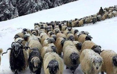 Kar Altında Köye Dönüş