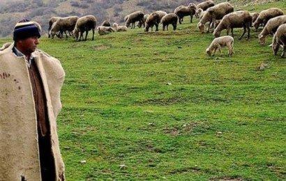 150 Bin Afgan Çoban İthal Edilecek