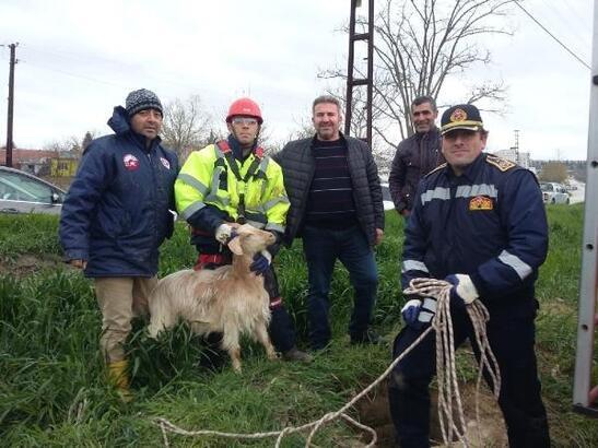 Kuyuya düşen anne keçi ve yavrusunu itfaiye kurtardı