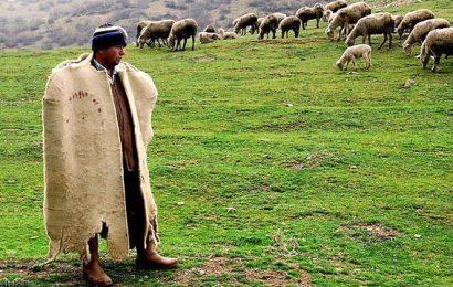 Çoban desteği nedir? Nasıl alınır?