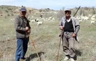 Erol kardeşlerin Ankara keçisi tutkusu…