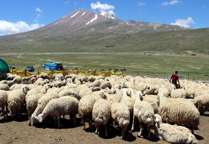 """""""4 bin lira maaşla çalıştıracak çoban bulamıyoruz"""" iddiası"""