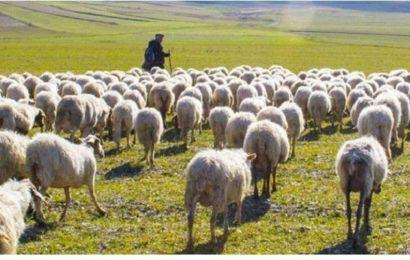 Çoban İstihdam Desteklemesi nedir? Kimler alabilir?