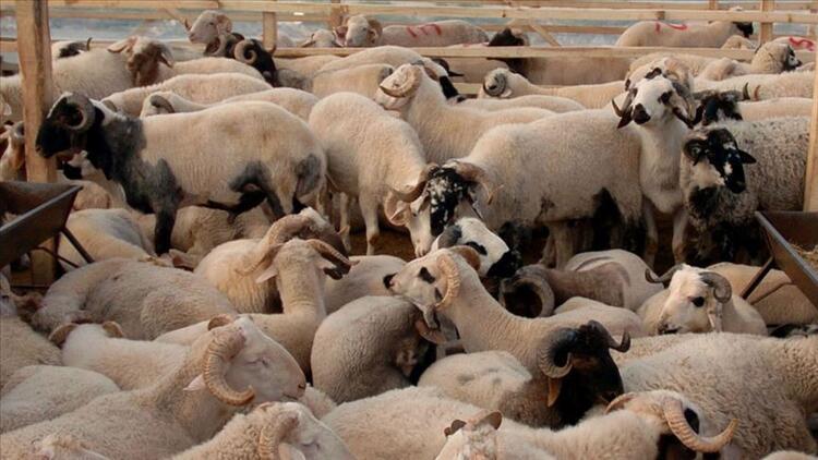 Bayramda kaç hayvan kurban edildi?