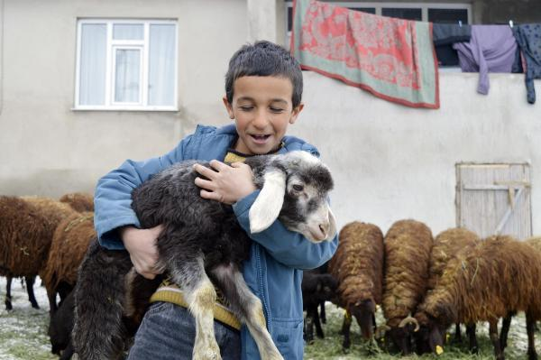 '5 yılda 750 bin koyun projesi' meyvelerini vermeye başladı…