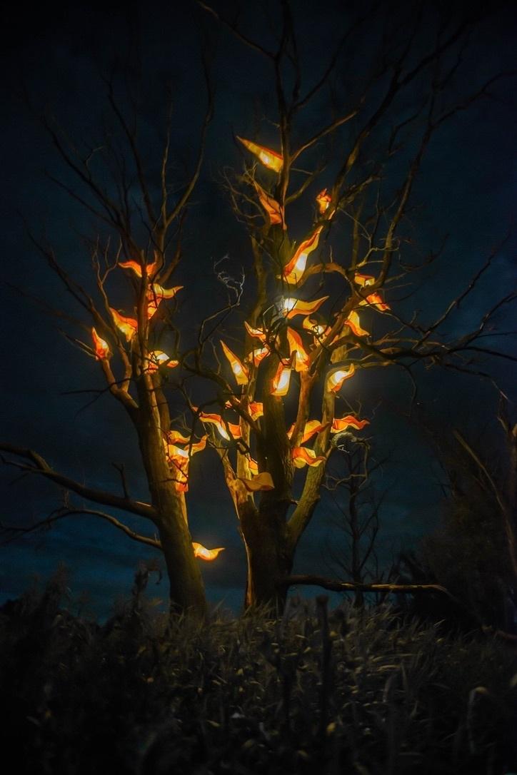 Gorejące drzewo 1