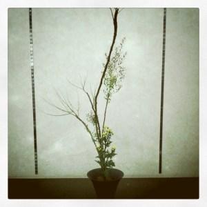 雲竜柳の生花