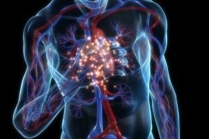 Osnovni vitalni znaci i vitalne funkcije