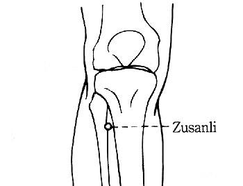 zusanli8b02