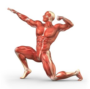 MuscularManPosing1-1024x1007