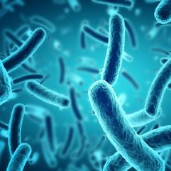 KOZMETIČKA PRIMENA PROBIOTIKA – dobre bakterije povoljne za kožu