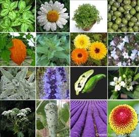 Primena bilja u kozmetici