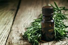 Lekovito dejstvo ulja čajevca