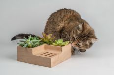 eco-planter-kitty