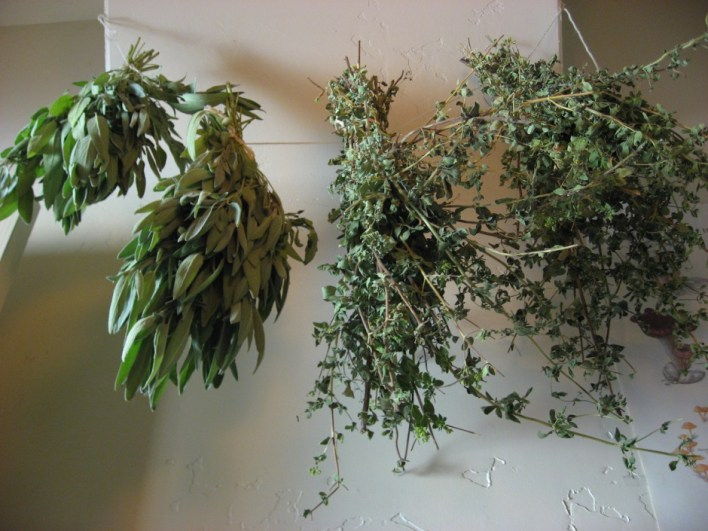 Dry-Herbs-by-Hanging-in-Bunches