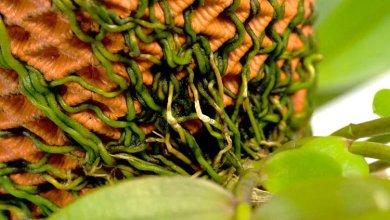 Photo of A kifordított ültetvényes, mely vizuális művészeti elemmé alakítja a növények gyökereit